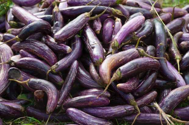 agriculture aubergine close up cook