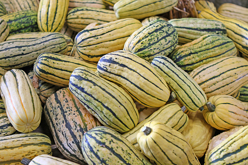 Delicate squash also known as peanut squash or sweet potato squash.